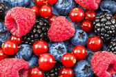 Mix of different berries — Stock Photo