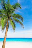 Palm tree in tropical perfect beach at Phuket. — Stock Photo