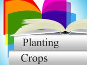 Planting Crops Indicates Agrarian Cultivation And Field — Stock Photo
