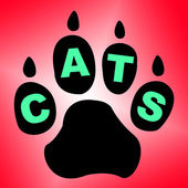 Cats Paw Shows Pet Services And Feline — Stock Photo