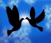 Peace Doves Indicates Flock Of Birds And Wildlife — Stock Photo