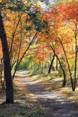 Autumn landscape - path in a mixed forest — Stock Photo