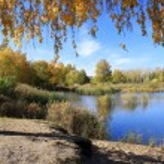 Autumn landscape - gold birch near pond — Stock Photo #65357181