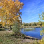 Autumn landscape - gold birch near pond — Stock Photo #67969711