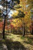 Autumn landscape - mixed forest — Stock Photo