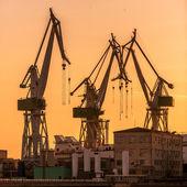 Industrial cargo cranes in the dock — Stock Photo