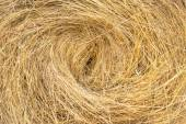 Hay bails on the field — Stock Photo