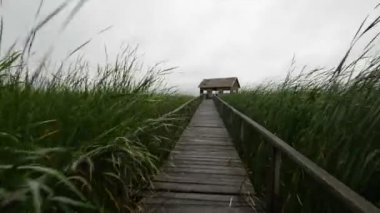 Wooden path trough the reed glidecam footage — Stock Video