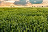 Cultivated land with cloudy sky — Stock Photo