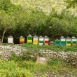 Honey bee hives in green forest — Stock Photo #65032931