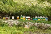 Honey bee hives in green forest — Stock Photo