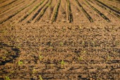 Cultivated land closeup — Stock Photo