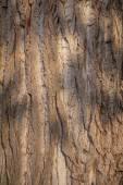 Closeup photo of a tree trunk — Stock Photo