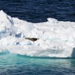 Antarctica - Seals On An Iceberg — Stock Photo #52408555