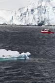 Antarctica Wildlife Expedition — 图库照片