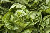 Leaf Vegetable - Lettuce — Stock Photo