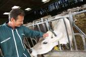 Cheerful farmer petting cow in barn — Stock Photo