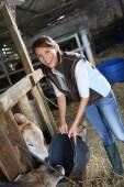 Woman breeder feeding cows in barn — Stock Photo