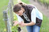 Woman checking on vine rows — Stock Photo