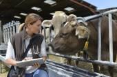 Veterinarian checking on herd's health — Stock Photo