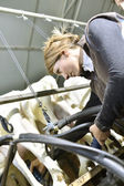 Breeder ready for goat milking — Stock Photo