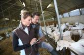 Couple of farmers using tablet — Stock Photo