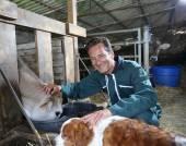 Cheerful farmer petting cows in barn — Stock Photo