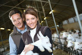 Couple of breeders carrying baby goat — Stock Photo