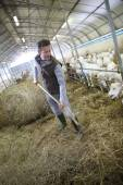 Breeder in barn gathering hay — Stock Photo