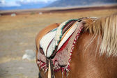 Horse saddle in Patagonian steppe — Stock Photo