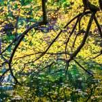 Tree branches autumn foliage over lake. — Stock Photo #58408117