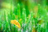 яркой зеленой траве фон. — Стоковое фото