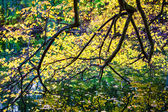 Tree branches autumn foliage over lake. — Стоковое фото