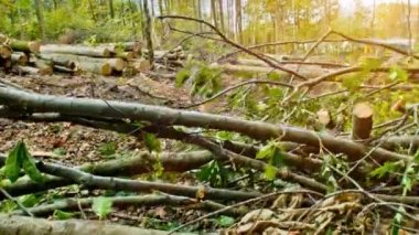 Storm destroyed forest — Stock Video