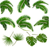 Set of palm leaves isolated on white background. Vector illustra