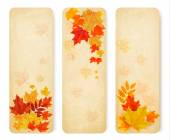 Three abstract autumn banners with color leaves. Vector — Stock Vector