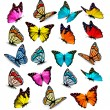 Big collection of colorful butterflies. Vector — Vector de stock  #66572151