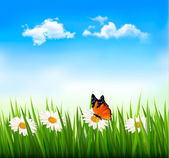 Nature background with green grass, flowers and a butterfly. Vec — Stock Vector