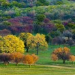 Colorful autumn trees on field — Stock Photo #55314403