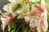 Beautiful lily bouquet — Stock Photo