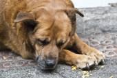 Street dog — Stock Photo