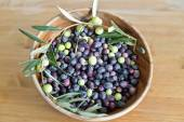Freshly picked organic Aegean Turkish olives — Stock Photo