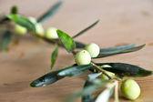 Freshly picked organic Aegean Turkish olives — Stock Photo