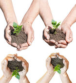 Set of peasant hands with soil and green sprout — Foto de Stock