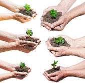 Set of farmer hands with soil and green sprout — Foto de Stock