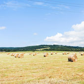 Harvested field with haystack rolls in Normandy — Stock Photo