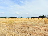 View of haystack rolls on harvested field — Stock Photo