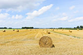 Yellow haystack rolls on harvested field — Stock Photo