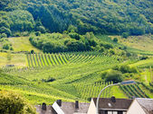 Vineyard on green hills in Moselle region — Stock Photo
