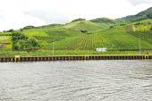 Moselle riverbank and vineyards, Germany — Stock Photo